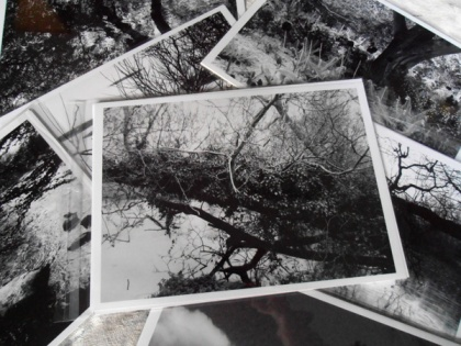 river, water, trees , branches imagery meehan,water branches black white photos sale buy, selection of black and white photographs - Jenny Meehan monochrome prints
