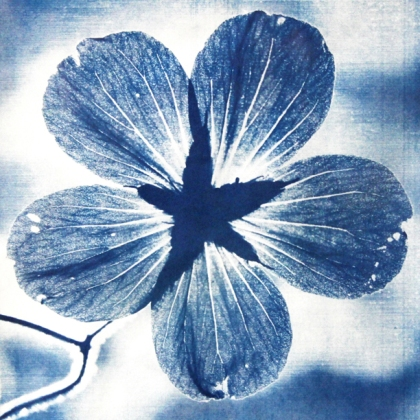 art at leatherhead theatre KAOS kingston artists' open studios exhibition Geranium Johnsons Blue cyanotype by EmilyLimna