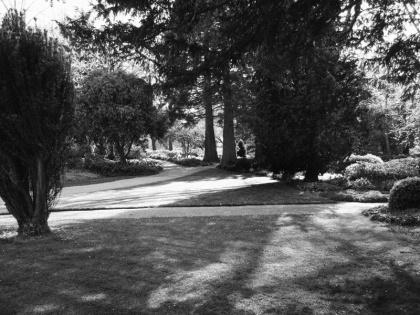 west dean gardens photograph, west dean sussex estate, west dean college garden, black and white garden photographs jenny meehan, foliage landscape photograph meehan