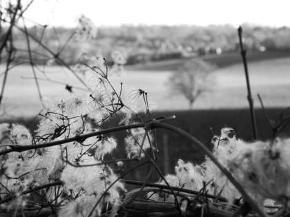 jenny dohan jamartlondon photography