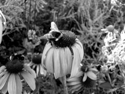 west dean gardens jenny meehan flora foliage jamartlondon